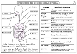 gcse digestive system structure and function worksheet answers pdf