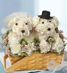 dog flower arrangement dogable collection delivery bradenton fl ms s flowers