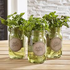 shop garden jar hydroponic herb kit grow basil parsley and mint