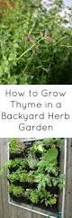 2882 best herb garden images on pinterest herb gardening herbs