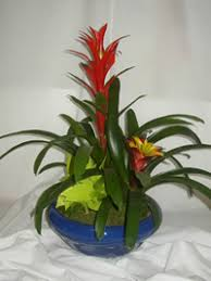 Indoor Plant Arrangements Indoor Plant Arrangements
