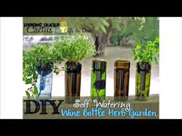 self watering wine bottle herb planter u2013 hydroponic indoor garden