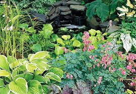 hosta astilbe and ferns great shade garden plants from