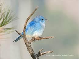 attract wild birds shop bird type wild bird co boulder co