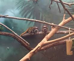 henry vilas zoo welcomes emperor tamarins wkow 27 madison wi
