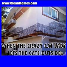 Funny Cat Lady Memes - crazy cat lady clean memes the best the most online