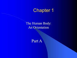 chapter 1 the human body an orientation ppt video online download