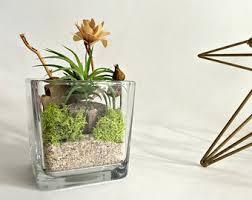 resume modernos terrarios suculentas cubo de cristal florero planta aire terrario vida decoración diy