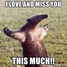 I Love You This Much Meme - i love and miss you this much fuck you i m an anteater meme