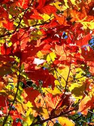 fall color tour u2022 marquette michigan estate