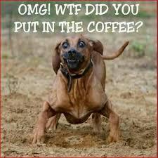 Hyper Dog Meme - 777 best dogs stuff images on pinterest little dogs adorable
