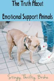 best 25 emotional support animal ideas on pinterest service dog