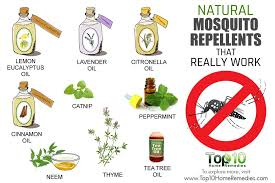 natural mosquito repellents 10 natural mosquito repellents that really work top 10 home remedies