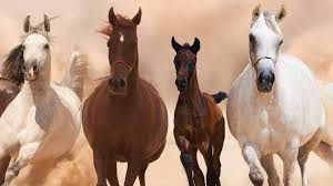 triple 9 2016 wallpapers animals multi monitor screen hair horse multiple triple amazing