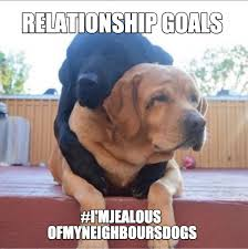 Dog Memes - when your neighbours dogs love life is better than yours dog memes
