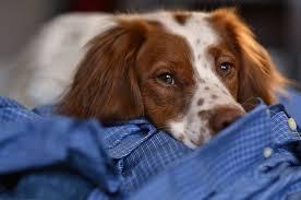 most popular dog breeds america u0027s favorite canine breeds