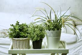 Plant For Bedroom Plants You Need To Buy For Your Bedroom To Help You Sleep