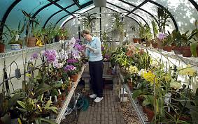 Orchids Care Orchid Care Tips On How To Care For Orchids