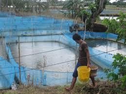 fish farming important revenue generation in jk worldnews