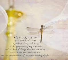 dragonfly quotes am linking to pink saturday bev from how