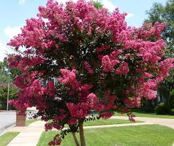 ornamental trees for photos of ornamental trees for