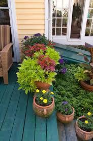 14 best coleus pots images on pinterest gardening garden ideas