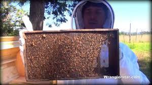 Raising Bees In Backyard by Honey Bees Back Yard Beekeeping Made Simple Youtube