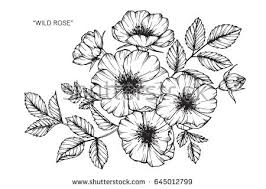 sketch flowers collection vector download free vector art stock