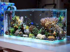 Aquascaping A Reef Tank Pin By Kyle On Salty Reefer Pinterest Aquariums