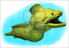 giant moray eel gymnothorax javanicus line art and full color
