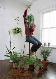 Modern Houseplants by More Plants Than Places To Sit Photo By Steven Beckly