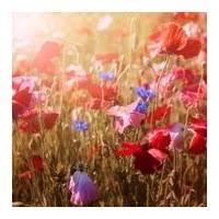 Joanne Barnes Joanne Barnes Obituaries Legacy Com