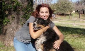 australian shepherd vomiting the 4 most common causes of vomiting in cats good pet parent