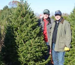 Cutting Christmas Tree - department of agriculture christie administration kicks off
