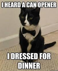 Tuxedo Meme - tuxedo cat names perfect choice tuxedo cats cat and animal