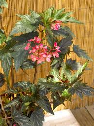 Flowering Patio Plants Tropical Flowers For Your Patio