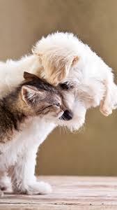 imagenes de animales whatsapp fondos para whatsapp animales tiernos y graciosos imágenes