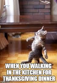Thanksgiving Cat Meme - cool cat stroll memes imgflip