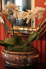 getting orchids to rebloom from ftd living with thanksgiving