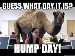 Hump Day Meme Funny - 10 funny hump day memes to get you through the week