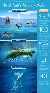 347 best whales whales whales images on pinterest humpback
