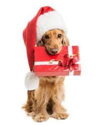 142 best gifts for dogs and dog lovers images on pinterest gifts