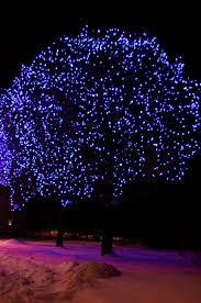 christmas lights c6 vs c9 ottawa christmas lighting citywide window cleaning
