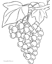 grapes coloring print color coloring pages kids