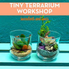 terrarium classes u2014 zeroasis