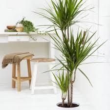 top house plants top 10 air purifying house plants awair medium