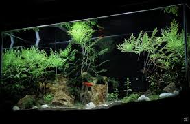 Green Machine Aquascape My First Stint In Aquascaping Aquascaping World Forum