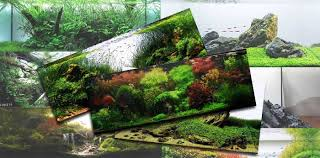 Aquascape Design Layout Aquascaping Styles For Beautiful Aquariums A Series Scapefu