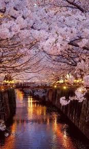cherry blossom wallpaper feelgrafix com pinterest cherry