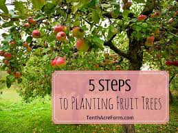 Transplant Fruit Trees - 5 steps to planting fruit trees tenth acre farm
